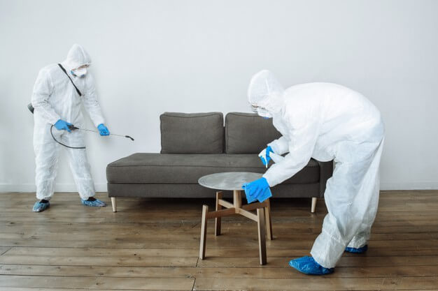 How to choose pest control for your home 2021